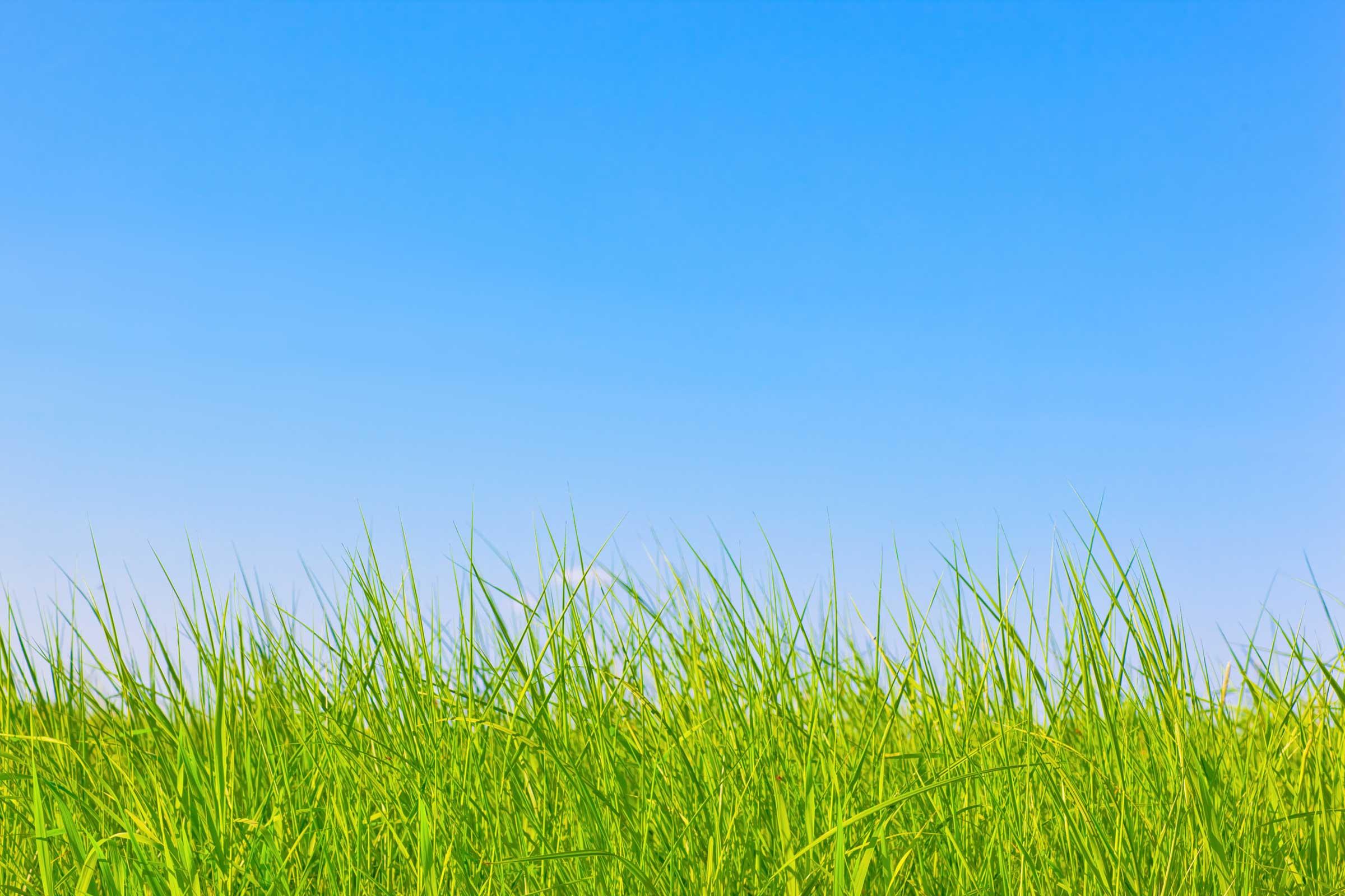 Silver Fox Natural Skincare for the urban man: grass